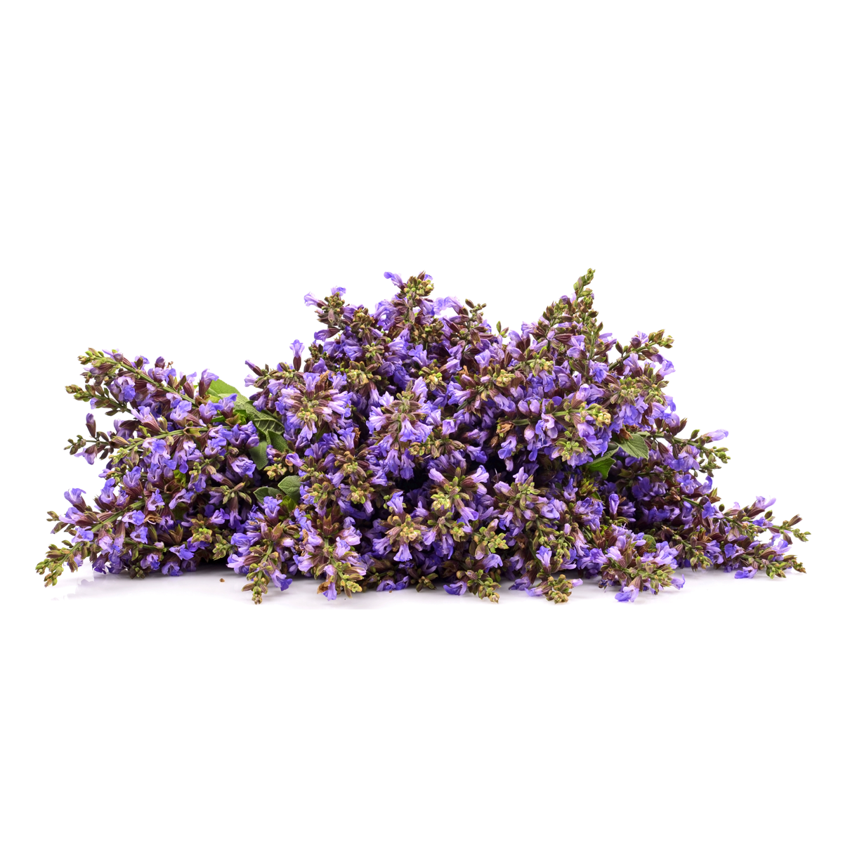 how to use clary sage oil to bring on labour