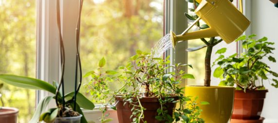 Plant Parenting - Growing your green thumb